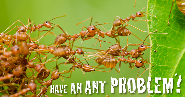 Have-an-Ant-Problem-2