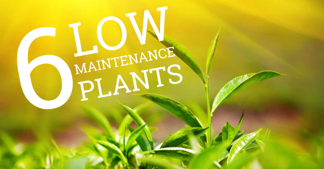 low-maintainence-plants