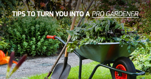 Tips to turn you into a pro gardener