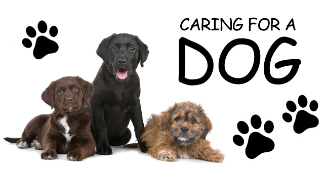 Caring for a dog