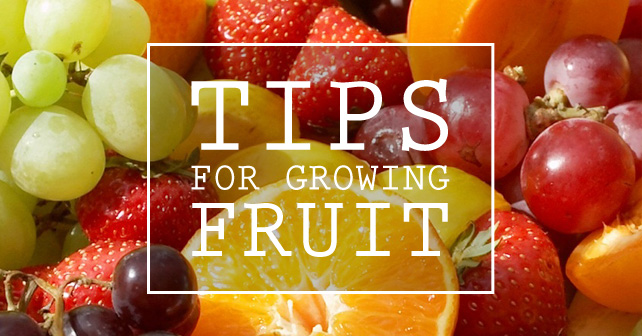 Tips for Growing Fruit