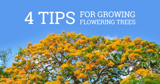 4 Tips for growing Flowering Trees