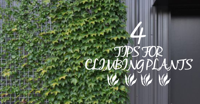 4 tips for climbing plants love my house