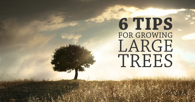 6 Tips for Growing Large Trees